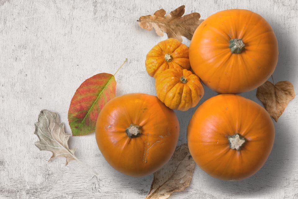 round pumpkins race outdoor thanksgiving family activities